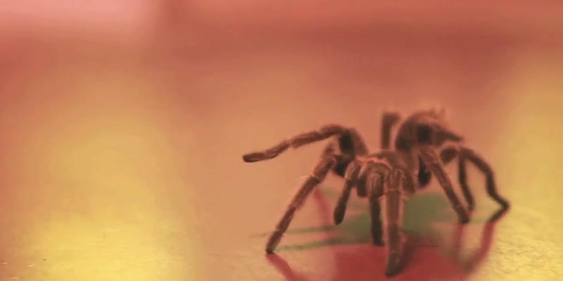 'Honeyspider' was filmed in Hillsborough, North Carolina.